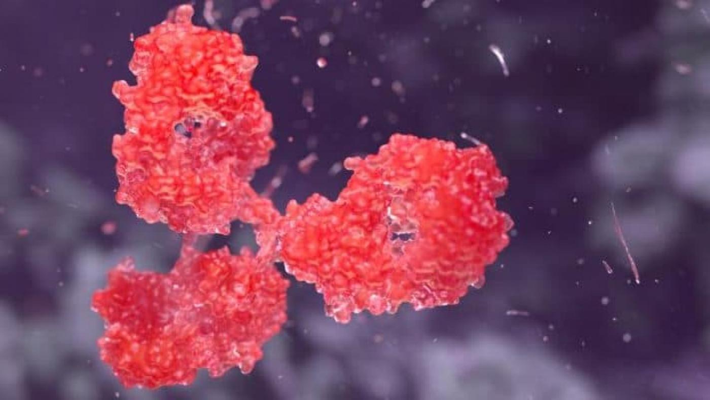 Cancer Fighting Antibody