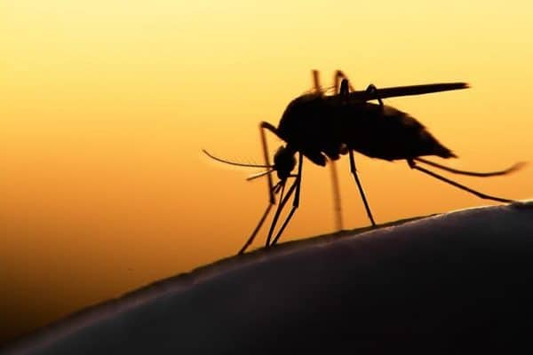 Research Suggests New Vaccine Candidates for Malaria