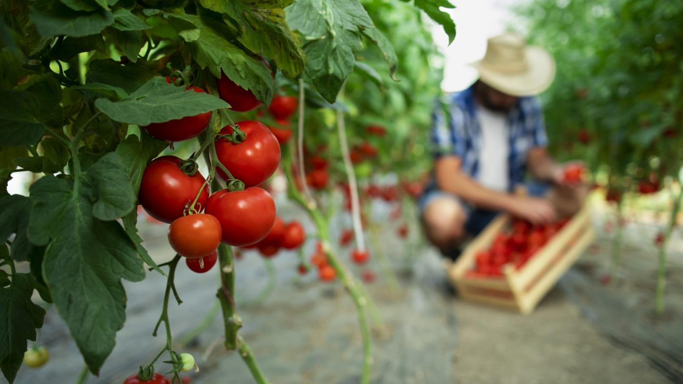 Organic food farm.