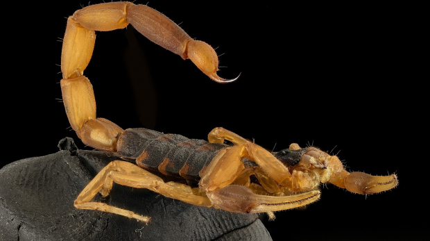scorpion-2789321_1280